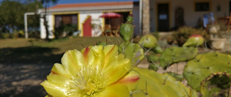 Blumen vor den Apartments